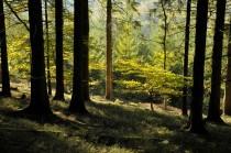 Gestion de forêt