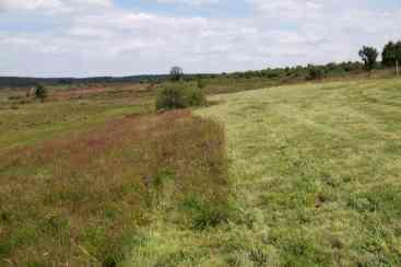 Prairie de récolte
