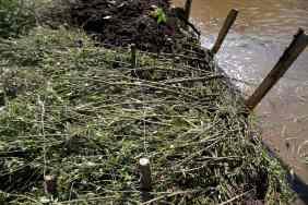 Installation d'un fagot en pied de berge et recouvrement de la berge avec des saules avant la mise en place d'une couverture de limon